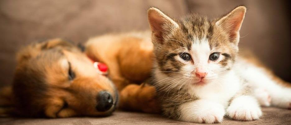 Hôpital Vétérinaire Animal 911 En Ligne
