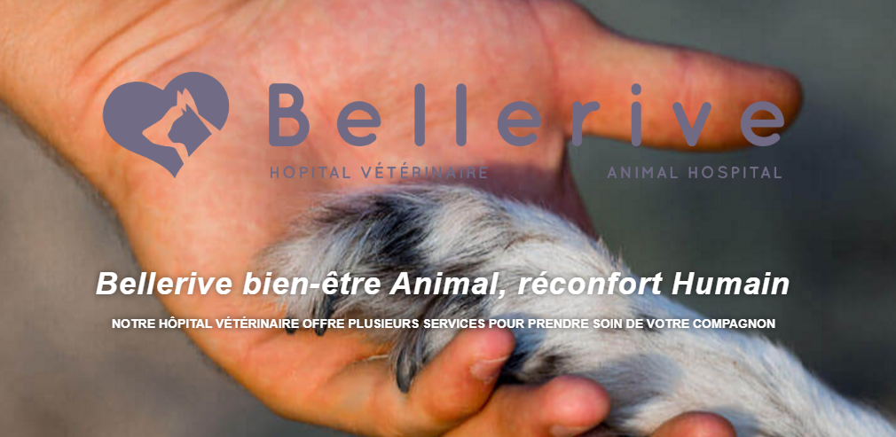 Hôpital Vétérinaire De Bellerive En Ligne