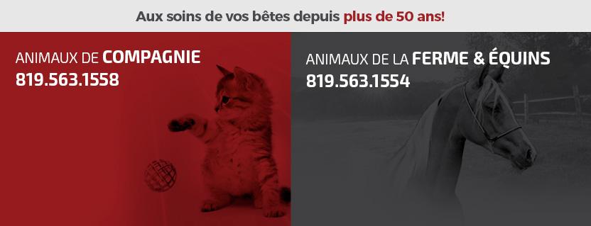 Hôpital Vétérinaire De Sherbrooke En Ligne