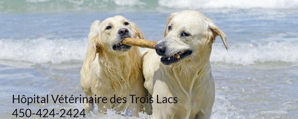 Hôpital Vétérinaire Des Trois Lacs En Ligne