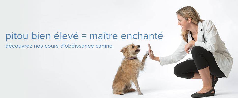 Hôpital Vétérinaire Pierrefonds En Ligne