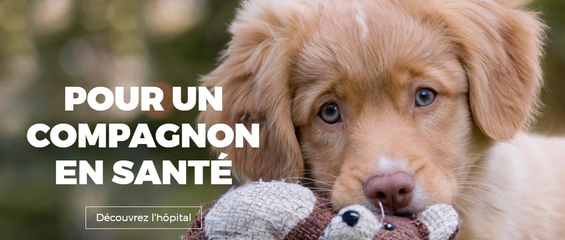Hôpital Vétérinaire Val Maurice En Ligne