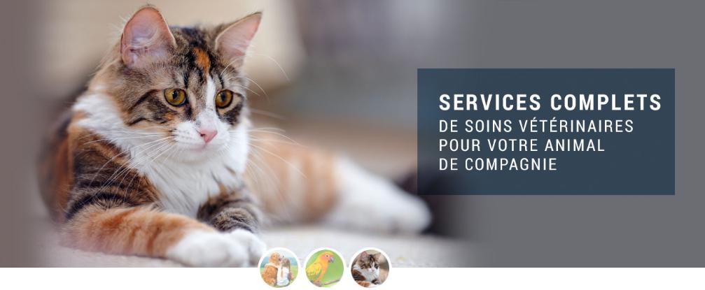 Hôpital Vétérinaire Vimont En Ligne